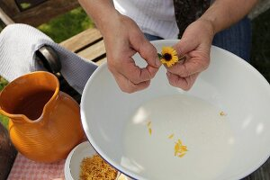 Plucking marigold petals for natural beauty treatment