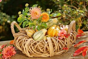 Autumnal arrangement of dahlias and ornamental gourds in basket on garden table