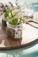 White grape hyacinths planted amongst moss in preserving jar