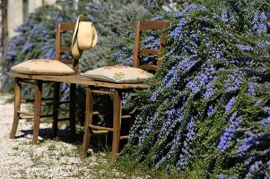 Wooden board with embroidered cushions laid over old kitchen chairs in front of flowering rosemary hedge