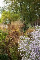 Bright autumn colours in herbaceous borders of natural-style garden