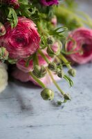 Bouquet of pink ranunculus and ranunculus buds