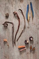 Dried leaves, plant stalks, shells and feathers