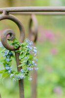 Wreath of forget-me-nots hung from wrought-iron frame