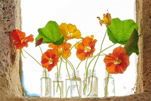 Nasturtium flowers in several small glass bottles on windowsill