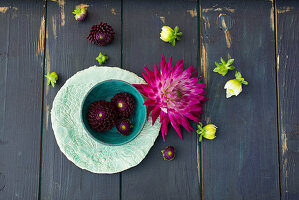 Dahlias in bowl and on wooden surface