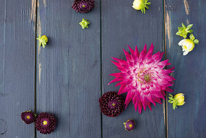 Dahlias on wooden surface