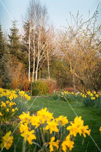 Blooming garden in Löhne, Germany