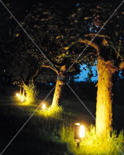 beleuchteter garten bodenlampen mit erdspiess im apfelgarten bild kaufen living4media. Black Bedroom Furniture Sets. Home Design Ideas