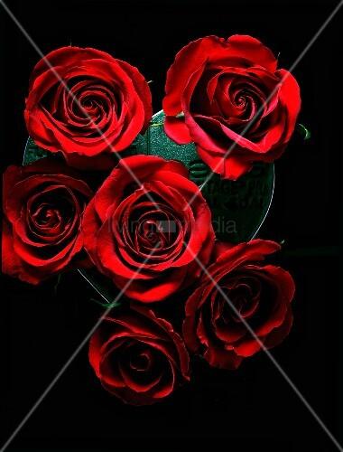 rote rosen auf einem schwarzen hintergrund bild kaufen living4media. Black Bedroom Furniture Sets. Home Design Ideas