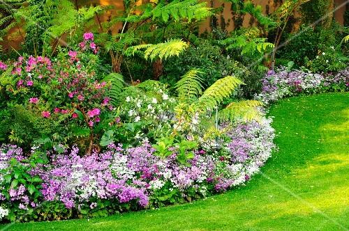 kleine violett bl hende staudenpflanzen als