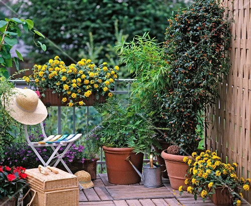 lauschiger balkon mit pr chtigen gelben bl ten und gro en topfpflanzen in einer ecke bild. Black Bedroom Furniture Sets. Home Design Ideas