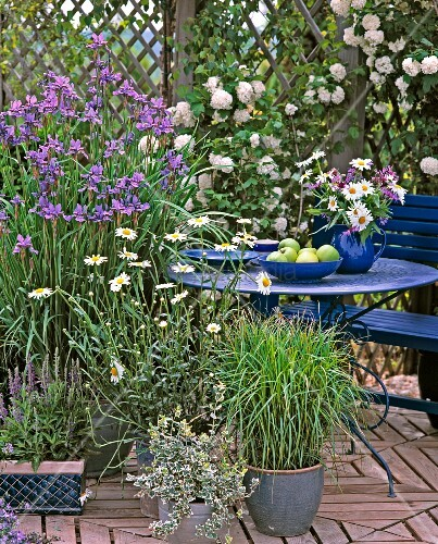 gartenterrasse mit kletterrosen und schwertlilien bild. Black Bedroom Furniture Sets. Home Design Ideas