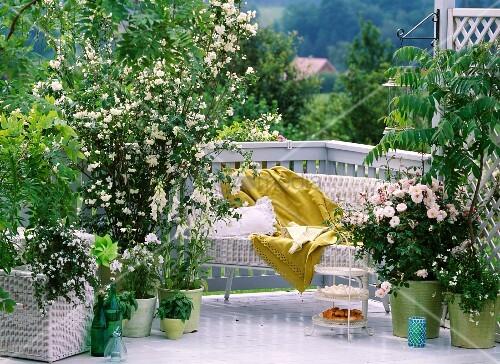 balkon mit sch ner aussicht und weiss bl henden pflanzen bild kaufen living4media. Black Bedroom Furniture Sets. Home Design Ideas