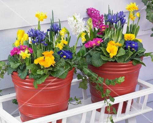 bunte fr hlingsblumen in t pfen auf der terrasse bild. Black Bedroom Furniture Sets. Home Design Ideas
