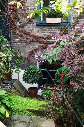 pflanzent pfe in bl hendem garten vor wohnhaus mit. Black Bedroom Furniture Sets. Home Design Ideas
