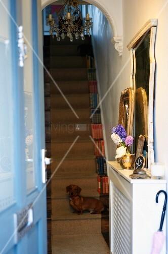 Treppenaufgang Tür blick durch offene tür auf treppenaufgang mit kronleuchter und hund