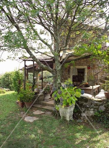 blick vom garten auf baum vor terrasse mit pergola und mediterranes natursteinhaus rustiko. Black Bedroom Furniture Sets. Home Design Ideas