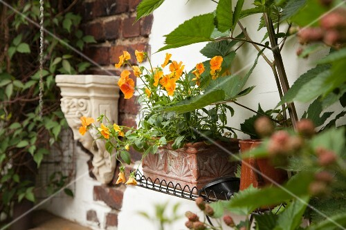 Orange violas planted in terracotta window box and antique greek style stone bracket mounted on - English style window boxes living facades ...
