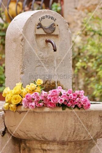 rosen liegen in steinbrunnen im garten bild kaufen living4media. Black Bedroom Furniture Sets. Home Design Ideas