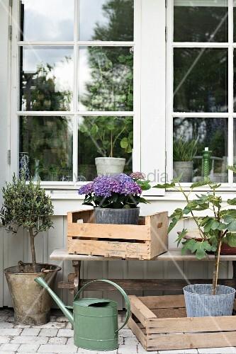 holzkisten mit pflanzen vor sprossenfenster auf der terrasse bild kaufen living4media. Black Bedroom Furniture Sets. Home Design Ideas