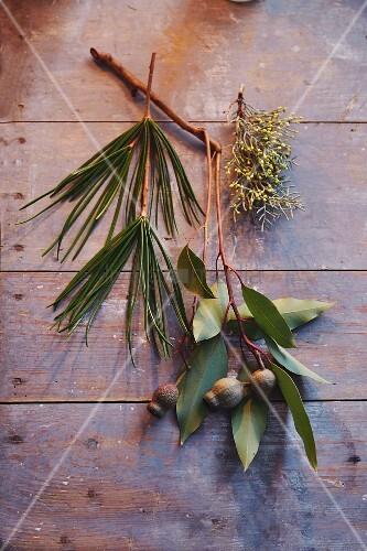 Rieseneukalyptus-, Schwarzkiefer- & Zypressenzweige