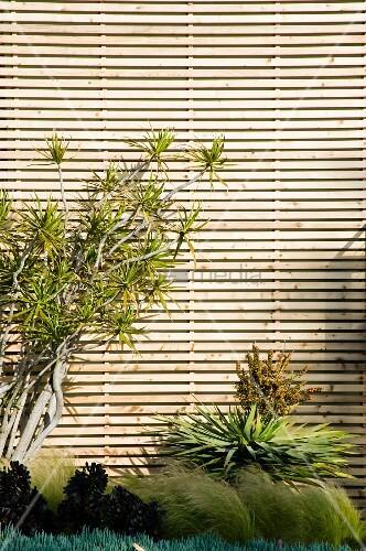 tropische pflanzen vor holzfassade mit horizontaler. Black Bedroom Furniture Sets. Home Design Ideas