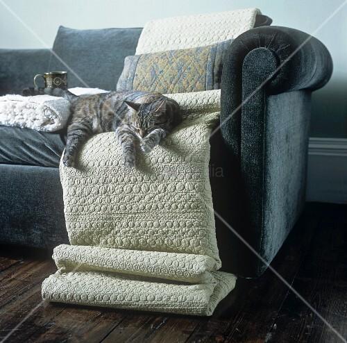 sofa mit decken und einer schlafenden katze bild kaufen living4media. Black Bedroom Furniture Sets. Home Design Ideas