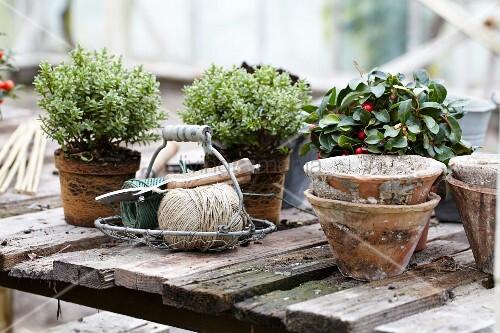 Rustikaler tisch mit herbstpflanzen drahtkorb und - Drahtkorb tisch ...
