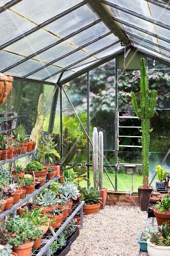 gew chshaus mit kiesboden verschiedenen topfpflanzen und kakteen bild kaufen living4media. Black Bedroom Furniture Sets. Home Design Ideas