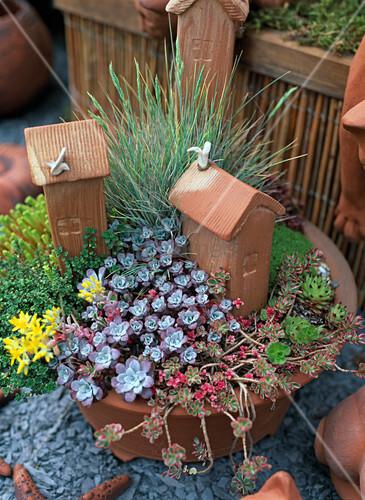 schale bepflanzt mit sukkulenten und gr sern bild kaufen living4media. Black Bedroom Furniture Sets. Home Design Ideas