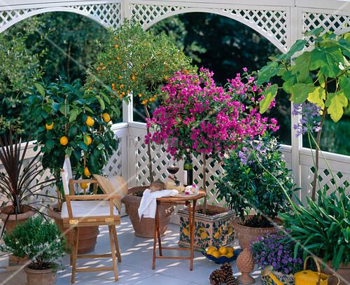 mediterraner balkon mit myrtus citrus limon bild kaufen living4media. Black Bedroom Furniture Sets. Home Design Ideas