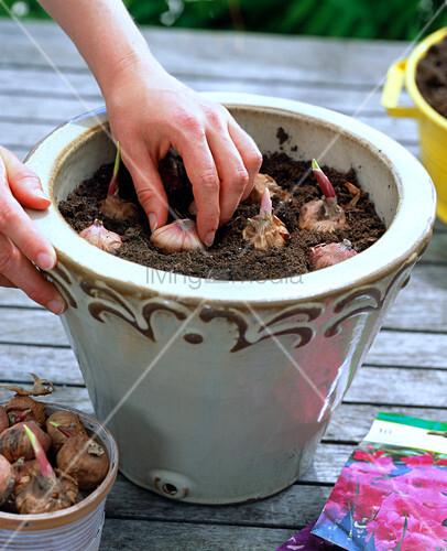 gladiolen in beigem k bel 1 4 bild kaufen living4media. Black Bedroom Furniture Sets. Home Design Ideas