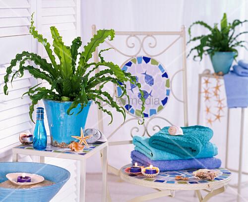 pflanze im bad asplenium antiquum osaka nestfarn bild kaufen living4media. Black Bedroom Furniture Sets. Home Design Ideas