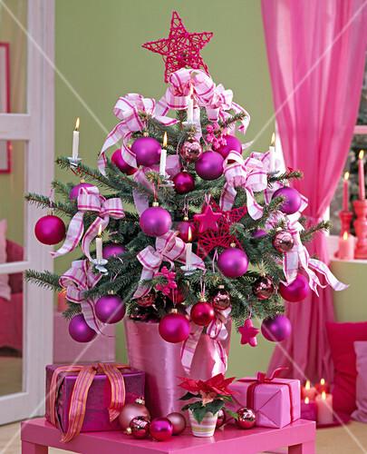 picea pungens stechfichte als lebendiger weihnachtsbaum im topf bild kaufen living4media. Black Bedroom Furniture Sets. Home Design Ideas