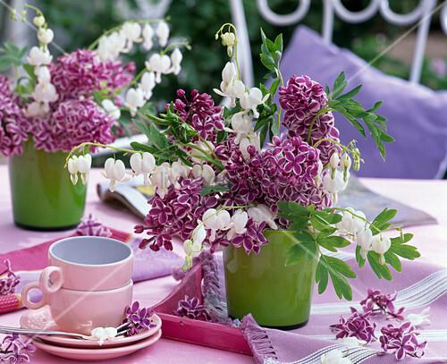 syringa flieder lila mit wei em rand dicentra. Black Bedroom Furniture Sets. Home Design Ideas