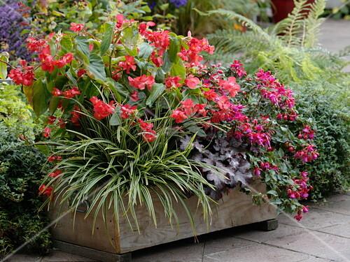 holzkiste bepflanzt f r eine schatten terrasse mit. Black Bedroom Furniture Sets. Home Design Ideas