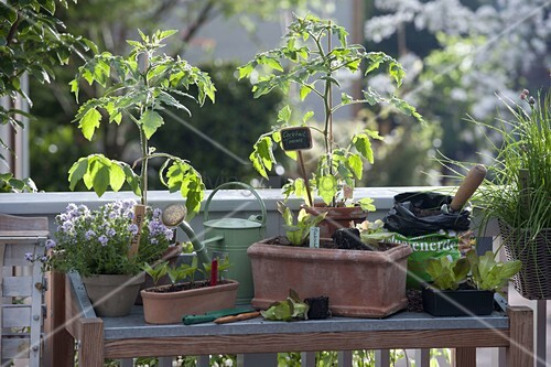 pflanztisch auf balkon tomaten lycopersicon thymian. Black Bedroom Furniture Sets. Home Design Ideas