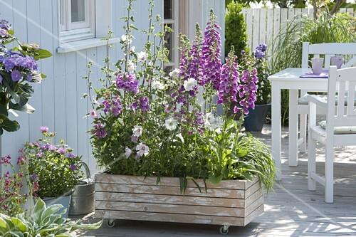 fahrbarer holz container als sichtschutz bepflanzt mit. Black Bedroom Furniture Sets. Home Design Ideas