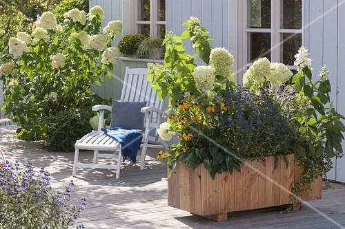 hortensien als sichtschutz auf der terrasse bild kaufen. Black Bedroom Furniture Sets. Home Design Ideas