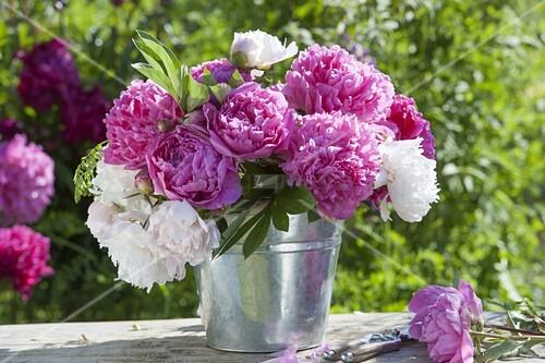pink weisser strauss aus paeonia pfingstrosen in zink topf bild kaufen living4media. Black Bedroom Furniture Sets. Home Design Ideas