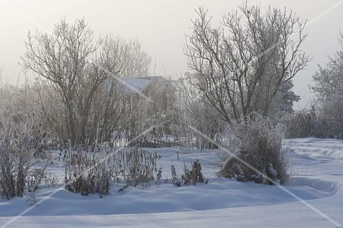 blick durch den verschneiten garten stauden gr ser und. Black Bedroom Furniture Sets. Home Design Ideas