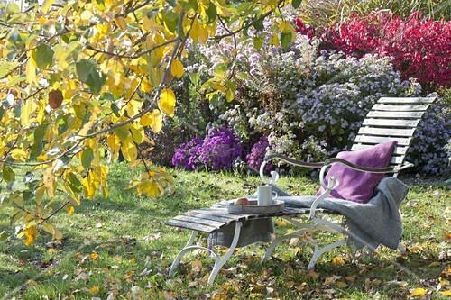 liege unterm apfelbaum im herbstlichen garten bild. Black Bedroom Furniture Sets. Home Design Ideas