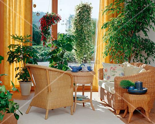 feng shui acalypha monstera bild kaufen living4media. Black Bedroom Furniture Sets. Home Design Ideas