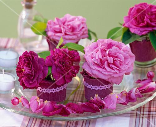 rosa bl ten von historischen rosen kleine gl schen mit bild kaufen living4media. Black Bedroom Furniture Sets. Home Design Ideas