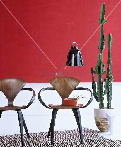 two designer chairs next to cactus in front of red and. Black Bedroom Furniture Sets. Home Design Ideas