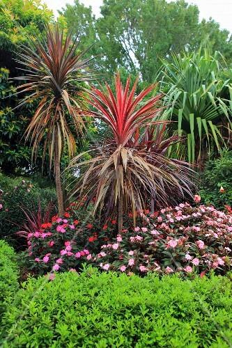 tropischer garten mit exotischen pflanzen und blumen. Black Bedroom Furniture Sets. Home Design Ideas