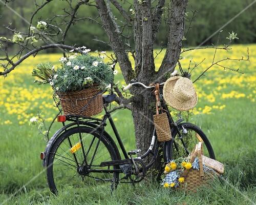 fahrrad mit margeriten am baum davor picknickkorb bild kaufen living4media. Black Bedroom Furniture Sets. Home Design Ideas