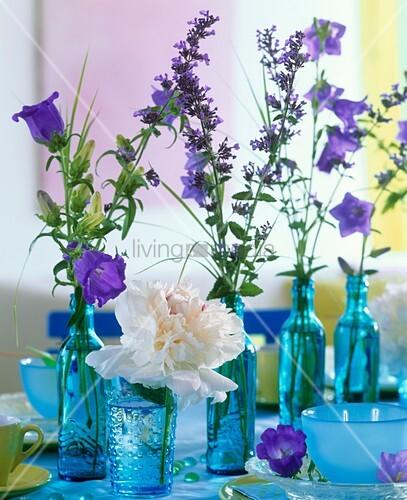 pfingstrose glockenblume katzenminze in blauen flaschen bild kaufen living4media. Black Bedroom Furniture Sets. Home Design Ideas