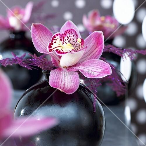 pinkfarbene orchidee in vase bild kaufen living4media. Black Bedroom Furniture Sets. Home Design Ideas